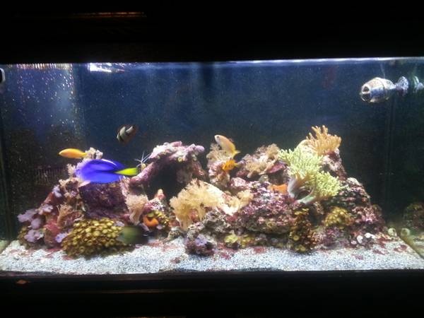 Sell Your Full Aquariums In Saint Louis
