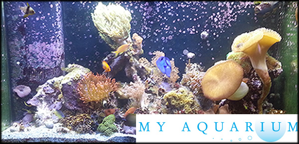 Visit Our Saint Louis Aquarium Blog